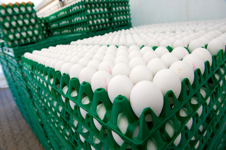 transported: White eggs in green plastic crates ready to be transported from a chicken farm