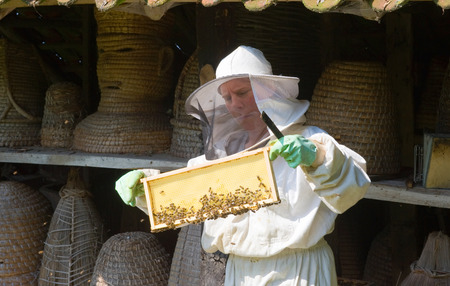 apiarist: LIEVELDE, THE NETHERLANDS - AUG 08, 2015: An apiarist is checking the frame of a honeycomb and wearing protective clothes Editorial