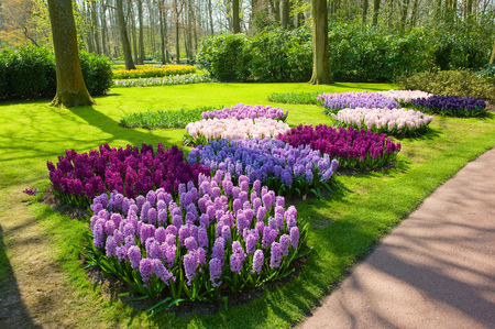 의 Keukenhof는 전 세계에서 백만 관광객들이 방문하는 인기있는 꽃의 정원입니다. 그것은 단지 육주 매년 열려 있습니다. 스톡 콘텐츠