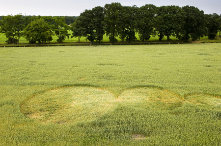 Mysterious crop circle in a wheat field near the city of Lochem in the Netherlands Stok Fotoğraf