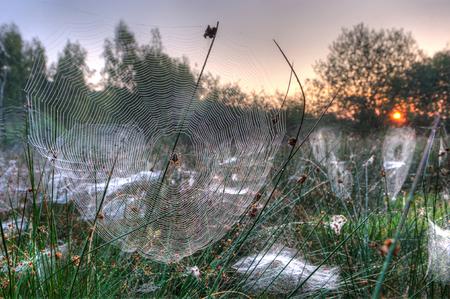 オランダの霧の朝の草の間のクモの巣。 HDR 撮影