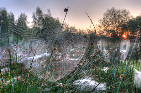 Spider web between grass on a misty morning in the Netherlands.HDR shot.