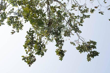 Hojas, ramas y cielo. Foto de archivo - 72181250