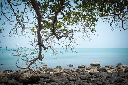 Ramitas de árboles grandes en el mar Foto de archivo - 84329558