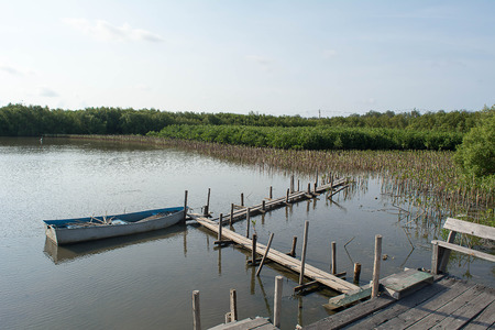 The bridge wood and Mangrove forest