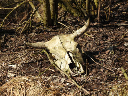 sconce: Animal skull