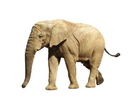 animalia: Elephant Stock Photo
