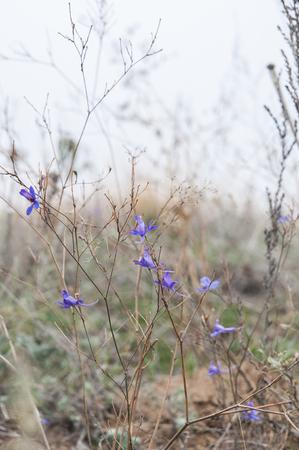 Field, flower, autumn, foggy day