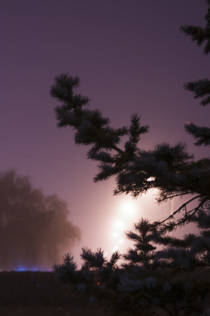 Night fog fir-tree road lantern 免版税图像