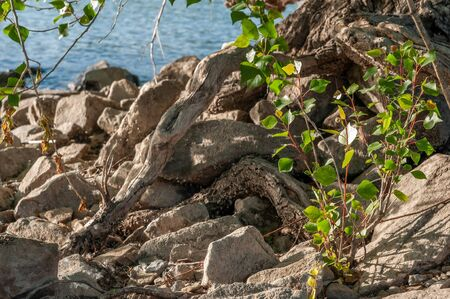 stones and plants by the river