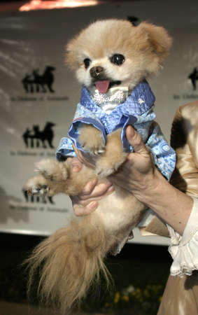 Mr Winkle at the IDA Awards - In Defense of Animals Hosts 2nd Annual Guardian Award held at the Paramount Studios in Los Angeles, USA on October 30, 2004.