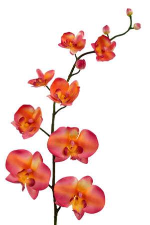 Orange orchid photo
