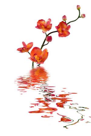 An orange orchid Reklamní fotografie - 823206