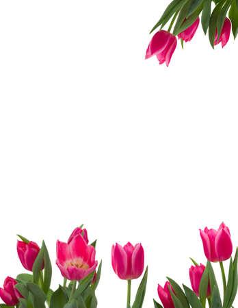 Beautiful flower frame Banque d'images