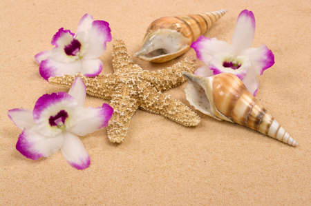 Tropical scene with starfish, seashells, golden sand and exotic orchids