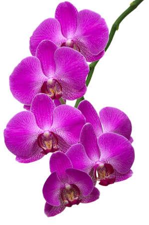 Beautiful tropical orchids Banque d'images