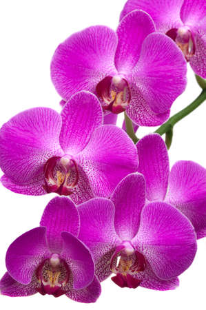 Beautiful tropical orchids Banco de Imagens