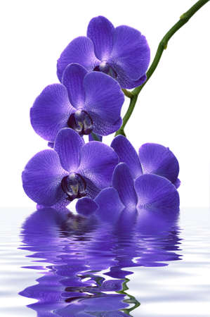 Beautiful tropical orchids with water reflection Banco de Imagens