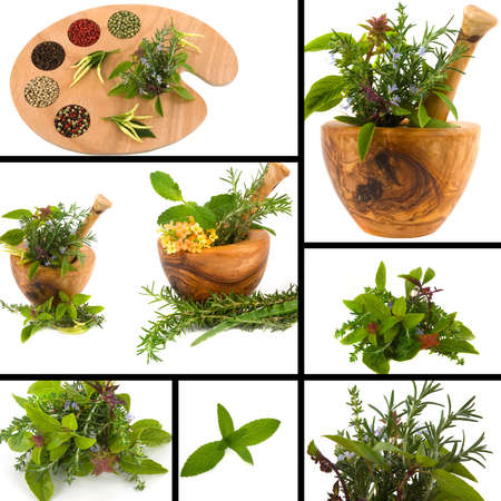 Herb collage with basil, mint, thyme, rosemary, parsley and peppercorn