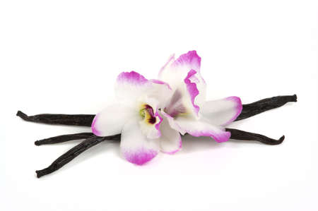 Madagascar vanilla pods and exotic orchids