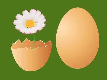 Eggs and daisy