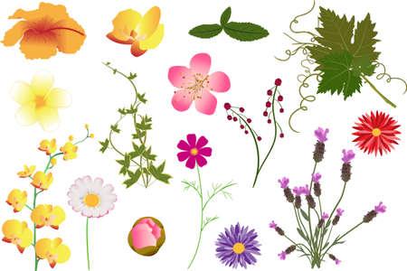 ベクターの花と葉の種類