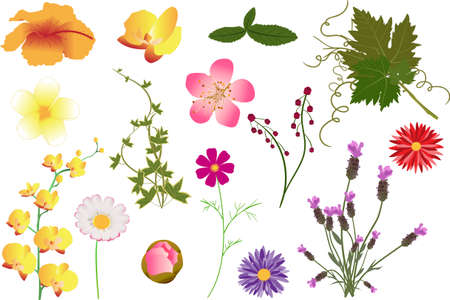 Different kinds of vector flowers and leaves
