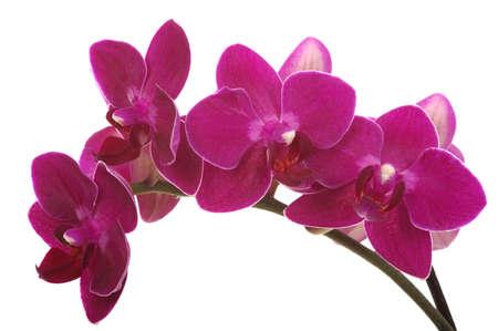 Orchid flower Banque d'images