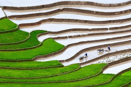Terraced rice fields in Mu Cang Chai, Yen Bai, Vietnam photo