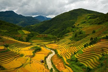 land management: Terraced rice fields in Mu Cang Chai, Yen Bai, Vietnam