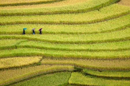 land management: terraced rice fields - three women visit their rice fields in Mu Cang Chai, Vietnam