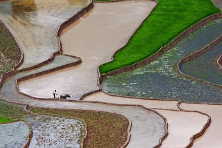 terraced rice fields in Mu Cang Chai, Vietnam  photo