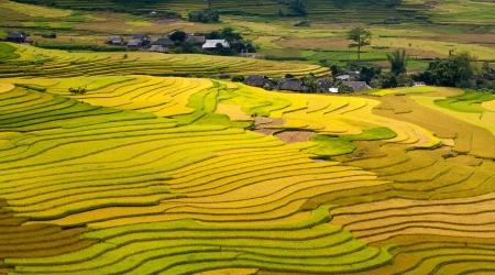 The landscape of Saigon: ruộng bậc thang - ruộng bậc thang vàng Mù Cang Chải, Việt Nam