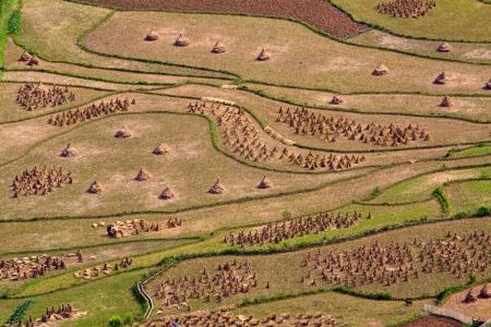ha giang:  Terraced rice fields in Ha Giang, Vietnam  Stock Photo
