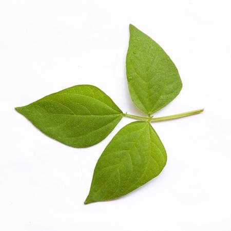 Beans Leaf Stock Photo - 22734283