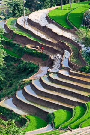 terraced rice fields with water in Mu Cang Chai, Yen Bai, Vietnam  photo