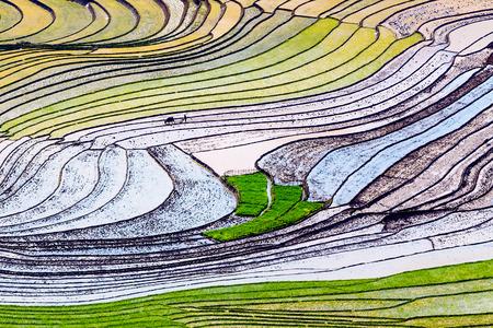 Beautiful terraced rice field in Lao cai province in Vietnam  photo