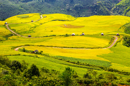 Beautiful terraced rice field in Lao cai province in Vietnam  photo