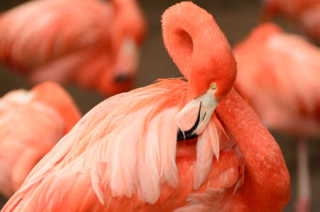 details of flamingos