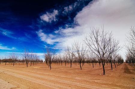 naked trees new mexico Banco de Imagens