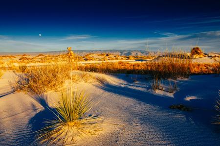 desert landscape new mexico