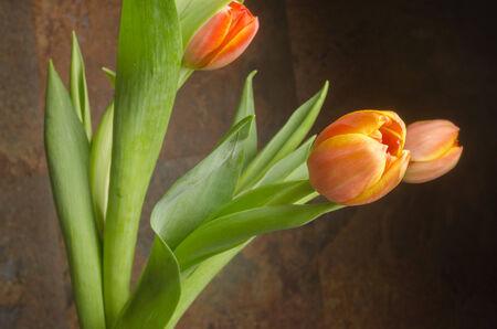 orange - yellow tulips details Banco de Imagens