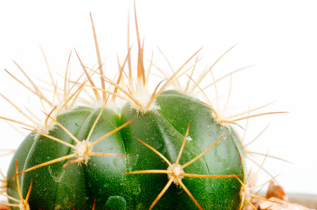 details of desertic suculenta and cacti plants