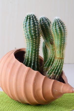 Cactus in a heart shaped ceramic pot Stock Photo