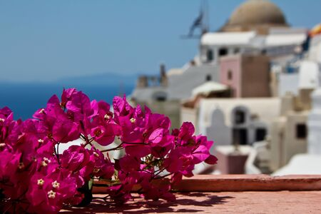 Flowers on Santorini island photo