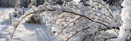 snowbound: The panorama of snowbound branch.