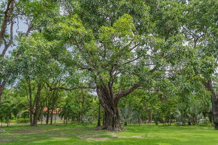 twiggy: the big tree in garden