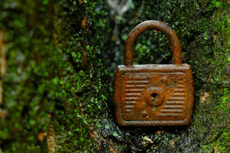 Rusty lock standing on a moss-covered wood Stock fotó