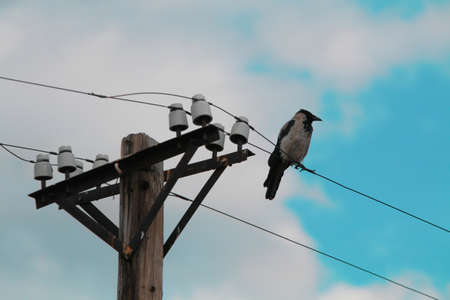 Single bird sitting on a cable of a power pillar Stock fotó