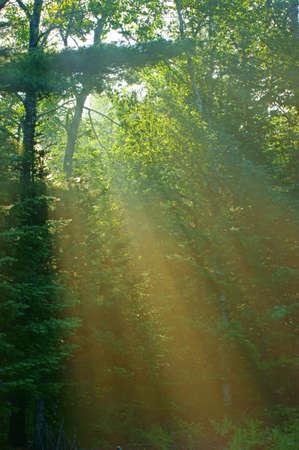 Gentle sunlight through trees  photo